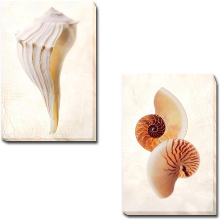 Great White Shell & Nautilus by Gayle & Glen Wans 2-Piece Premium Gallery-Wrapped Canvas Giclee Art Set - 16 x 24 x 1.5 in. - image 1 de 1