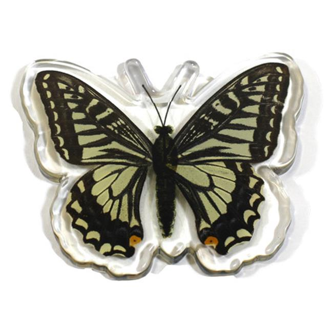 Ed Speldy East Company MT502 Real Bug Asian Swallowtail Butterfly, Magnet