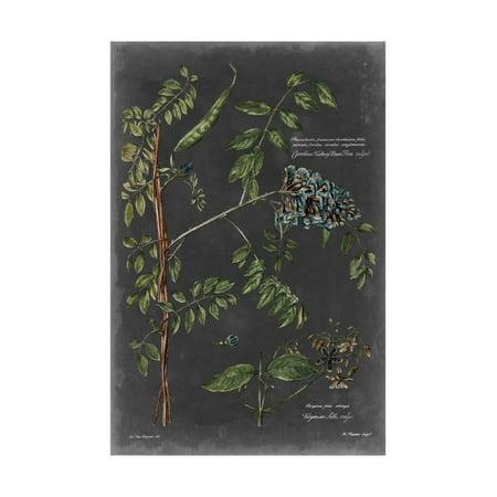 Vintage Botanical Chart VII Print Wall Art By Vision Studio