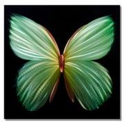 Metal Artscape Nova Butterfly Graphic Art Plaque in Green