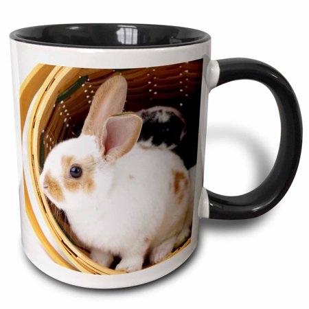 3dRose Young Rex rabbits in Easter basket. - Two Tone Black Mug, 11-ounce