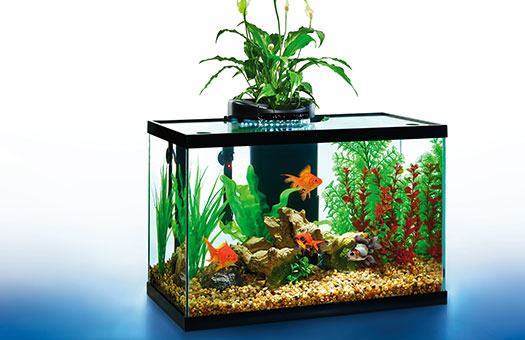 AquaDuo LED Aquarium Kit, 20-Gallon by Elive