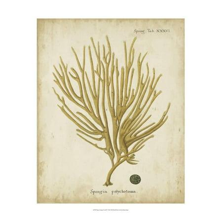 Esper Antique Coral IV Print Wall Art By Johann Esper