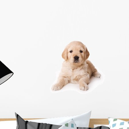 Golden Retriever Puppy White Wall Decal by Wallmonkeys Peel and Stick Graphic (18 in H x 18 in W) WM1105 ()