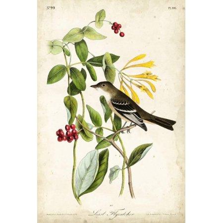 Audubon Bird & Botanical II Print Wall Art By John James Audubon