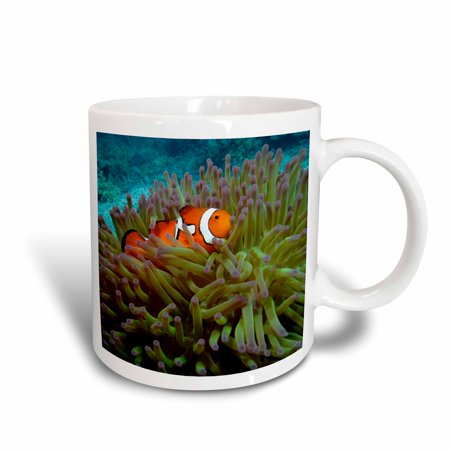 3dRose Western Clownfish, Great Barrier Reef, Australia-AU01 DWA3022 - David Wall, Ceramic Mug, 15-ounce