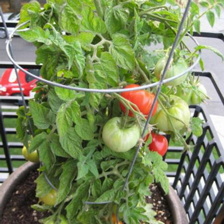 Tomato Garden Seeds - Patio Hybrid - 100 Seeds - Non-GMO, Vegetable Gardening Seed