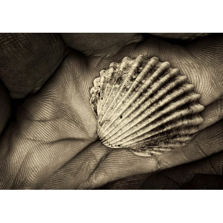Canvas Print Grip Black White Hand Shell Fossil Still Life Stretched Canvas 10 x 14