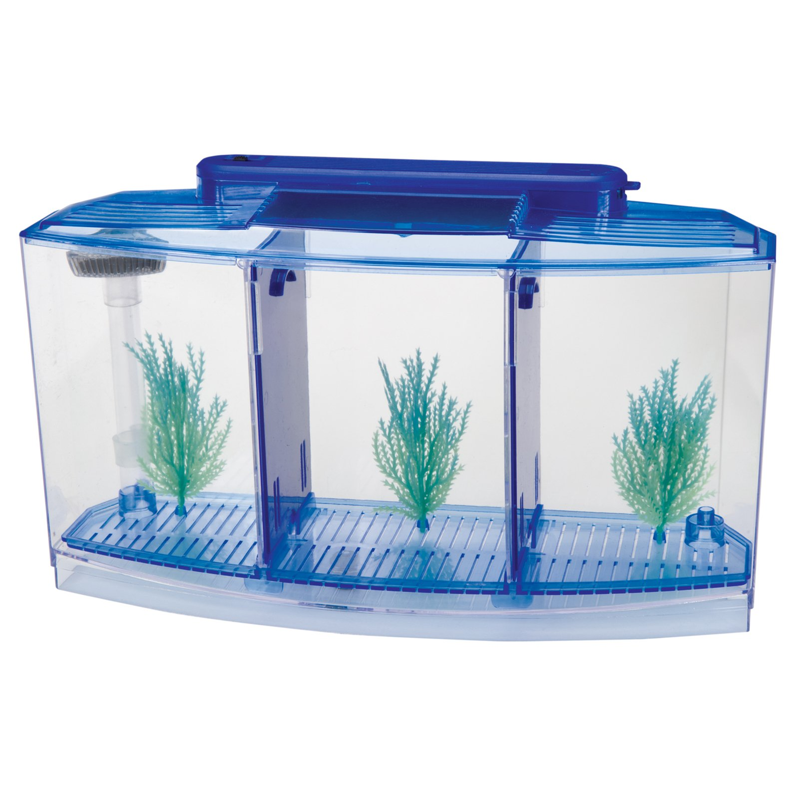 Aquarium for betta fish 1000 aquarium ideas for Betta fish tanks petsmart
