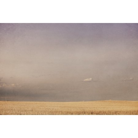 Minimalist landscape of a prairie grain stubble field alberta canada Stretched Canvas - Roberta Murray  Design Pics (19 x 12)