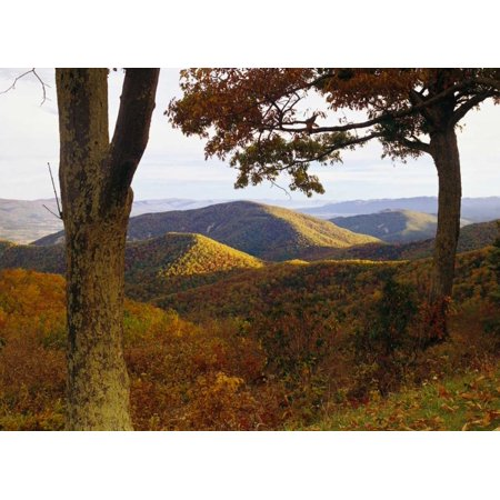 Autumn forest at Brown Mountain Shenandoah National Park Virginia Poster Print by Tim