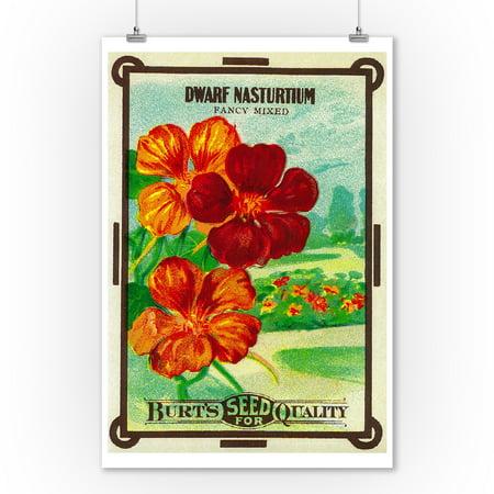Dwarf Nasturtium (fancy mixed) Seed Packet (9x12 Art Print, Wall Decor Travel