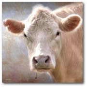 "Courtside Market Up Close Cow 16""x16"" Gallery-Wrapped Canvas Wall Art"