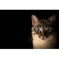 Framed Art for Your Wall Pet Animal Look Feline Animals Kitten Cat Rest 10x13 Frame