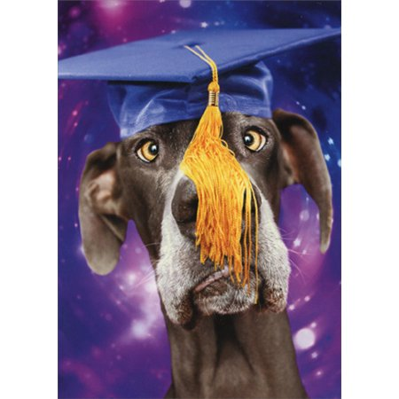 Avanti Press Cross Eyed Dog Wearing Mortar Funny Graduation Card - Funny Halloween Cards Online