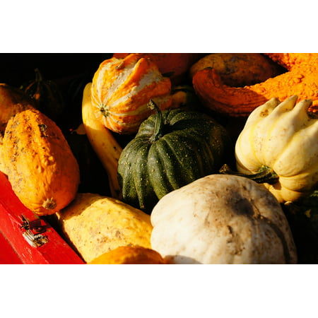 Canvas Print Vegetables Halloween Autumn Pumpkin Harvest Stretched Canvas 10 x 14](Harvest Halloween)