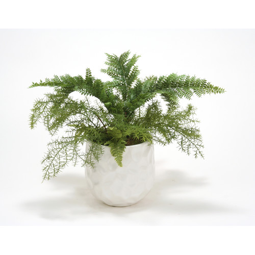 Distinctive Designs Fern Mix Desk Top Plant in Pot