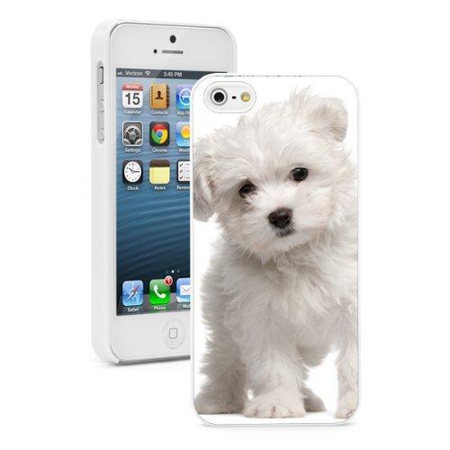 Apple iPhone (6 Plus / 6s Plus) Hard Back Case Cover White Maltese Puppy Dog (White)