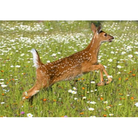 White Tailed Deer Fawn in Field of Spring Flowers Poster Print by John Pitcher, 32 x 22 -