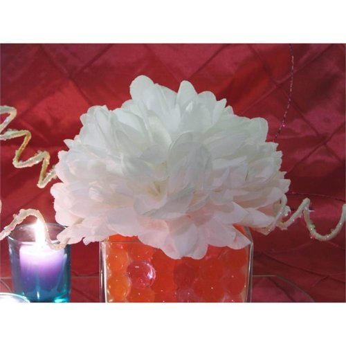 Hikari Ya Ya  12 SUPER Large Single Mums Flowers for KISS...