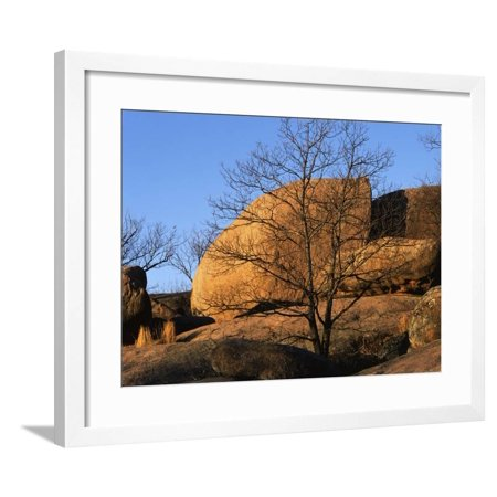 White Oak State Park Halloween (White Oak and boulders, Elephant Rocks State Park, Missouri, USA Framed Print Wall Art By Charles)