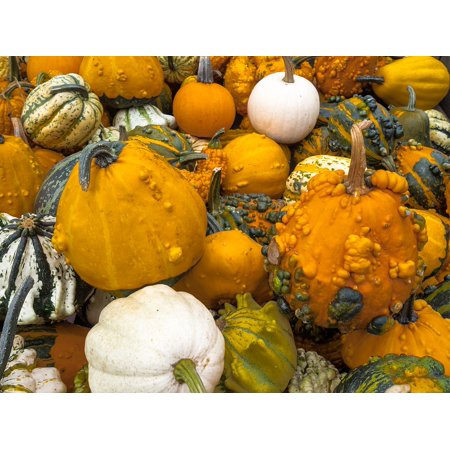 LAMINATED POSTER Autumn Autumn Decoration Pumpkin Halloween Gourd Poster Print 24 x 36