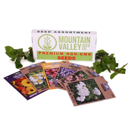 - Medicinal & Herbal Tea Garden Seed Collection - Basic Assortment - 6 Non-GMO Herb Seed Packets: Chamomile, Lavender, Lemon Mint, Yarrow, Echinacea, More