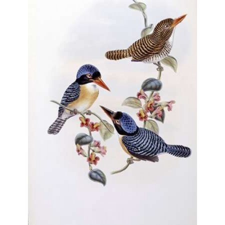 Black Faced Kingfisher Stretched Canvas - John Glover (9 x 12) (Jigsaw Face)