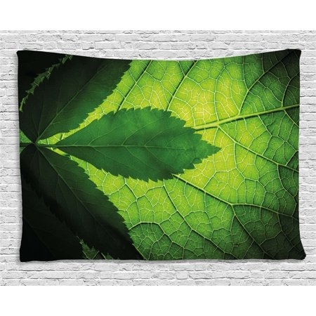 Green Decor Tapestry  Nature Forest Big Amazon Brazilian Tree Leaf With Vein And Sunbeams Image  Wall Hanging For Bedroom Living Room Dorm Decor  80W X 60L Inches  Olive Dark Green  By Ambesonne