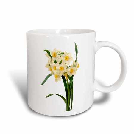 3dRose Redoute Vintage Watercolor Floral White And Yellow Narcissus Tazetta, Ceramic Mug, 11-ounce - Floral White Ceramic