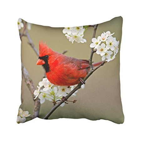 WinHome Decorative Red Northern Cardinal - Throw Pillow Cover Case Size 18x18 inches Two Side