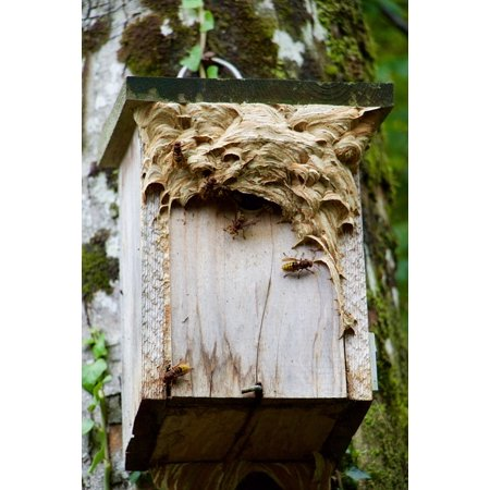 Canvas Print Nest Nature Aviary Hornets Nest Building Stretched Canvas 10 x