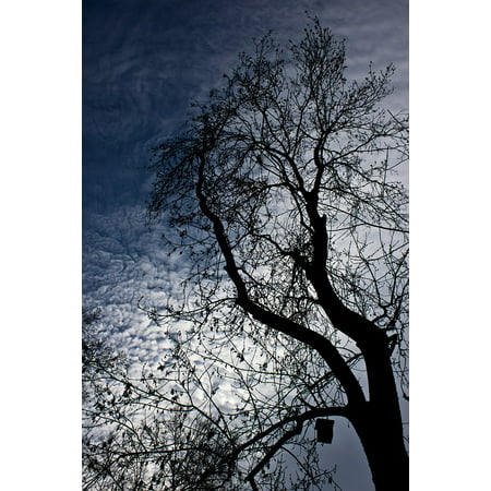 Framed Art for Your Wall Sky Tree Cloud Silhouette Leaves Forest Branch 10x13 (Forest Silhouettes)