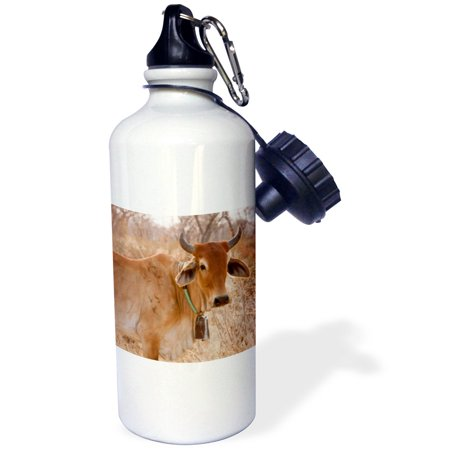 - 3dRose Botswana, Tsodilo Hills, Farm animal, cow-AF05 BJA0013 - Janyes Gallery, Sports Water Bottle, 21oz