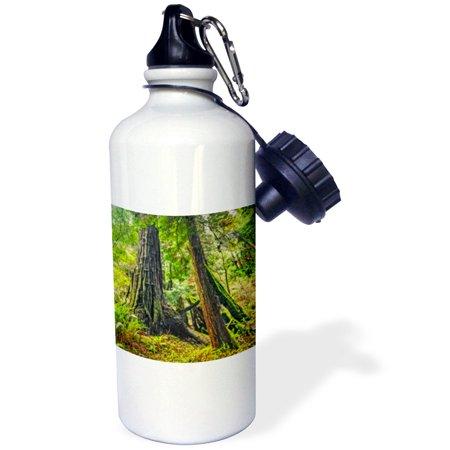 Tree Trunk Legs (3dRose Tree trunks at Muir Woods, Sports Water Bottle, 21oz)
