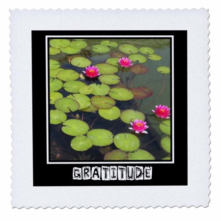 3dRose Zen Gratitude Lily Pads and Lotus Flowers Spirituality Motivational - Quilt Square, 10 by (Flowers Pad)
