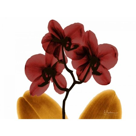 Orchid Fall Poster Print by Albert Koetsier