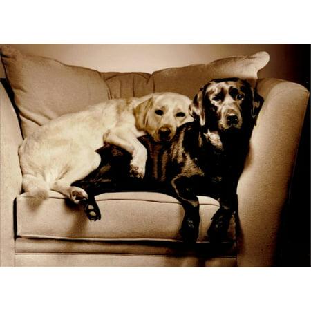 Avanti Press 2 Labs in Overstuffed Chair Black Labrador Retriever Love Card (Modular Overstuffed Chair)