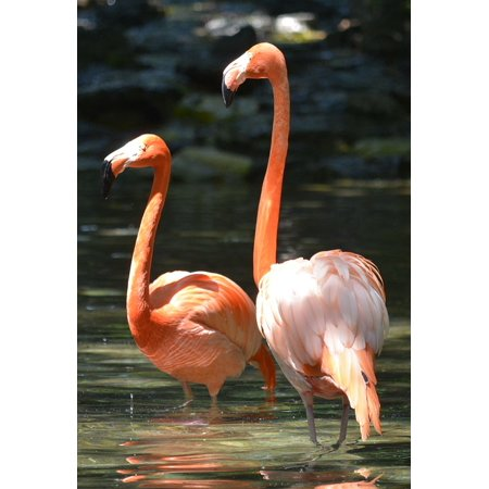 Framed Art for Your Wall Philadelphia Zoo Pink Flamingo Birds 10x13 Frame - Flamingos For Sale
