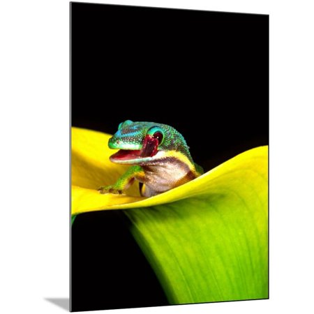 - Lined Day Gecko, Native to Madagascar Wood Mounted Print Wall Art By David Northcott