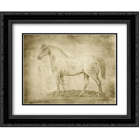 Horse Anatomy 101 2x Matted 24x20 Black Ornate Framed Art Print by Murdock, Ramona