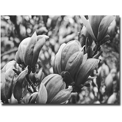 "Trademark Fine Art ""Closeup Magnolias"" Canvas Wall Art by Ariane Moshayedi"