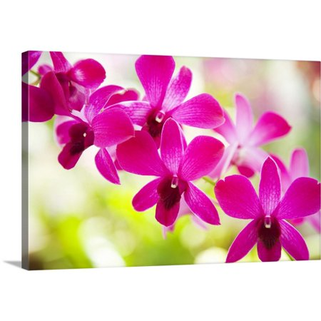 - Great BIG Canvas | Dana Edmunds Premium Thick-Wrap Canvas entitled Hawaii, Closeup Of Orchid Lei
