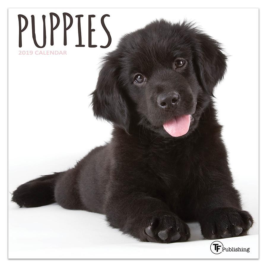 "2019 Puppies 7"" x 7"" January 2019-December 2019 Mini Wall Calendar"