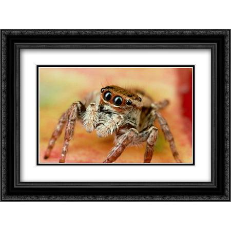 Jumping Spider portrait, Reunion 2x Matted 24x18 Black Ornate Framed Art Print by Moffett, Mark - Black Jumping Spider