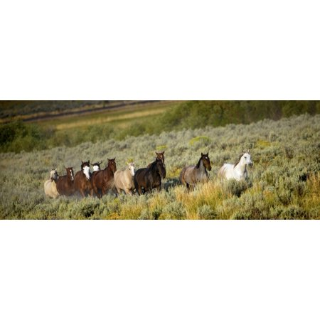Wild Horses Canvas Art - Richard Wear  Design Pics (36 x 13) (Horse Art Pic)
