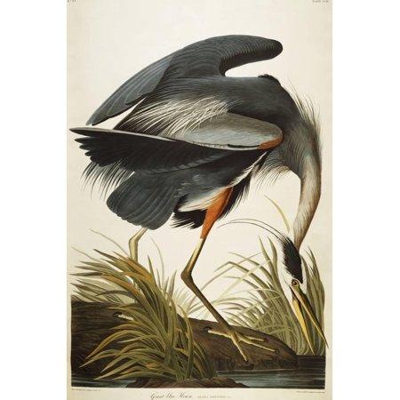 Heron Bay Wall - Great Blue Heron Vintage Bird Illustration Print Wall Art By John James Audubon