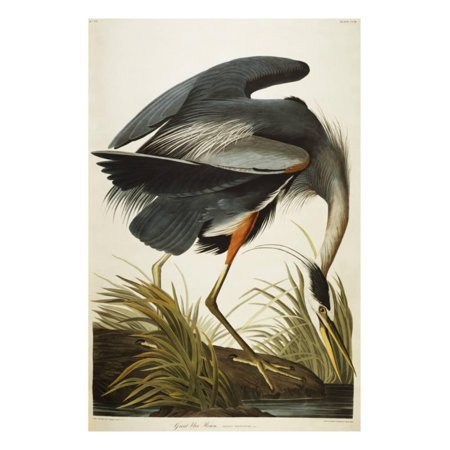 Great Blue Heron Vintage Bird Illustration Print Wall Art By John James Audubon