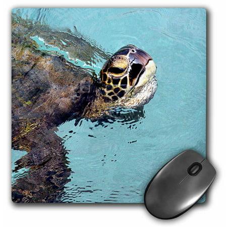 3dRose Skilpadde, Pasific green turtle, Hawaiian green sea turtle, Hawaiian name is Honu, Mouse Pad, 8 by 8
