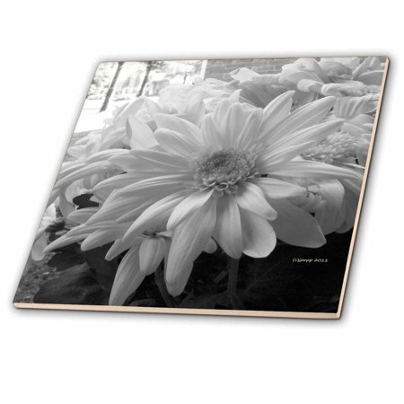 3dRose white daisies black and white - Ceramic Tile, 4-inch